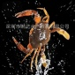 ���S油蟹
